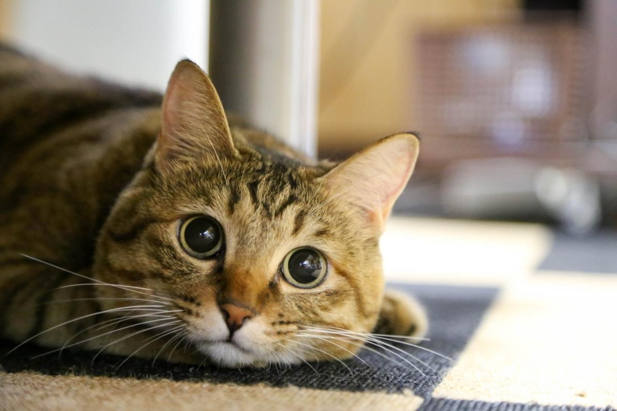猫ちゃんとおうちでのんびり