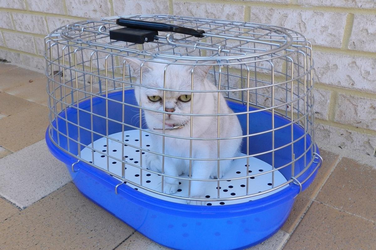 獣医さんに連れていかれる猫