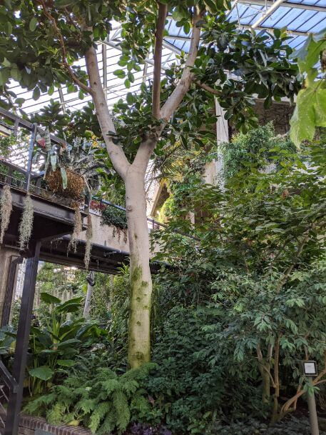 バービカン・コンサーバトリー 大都会ロンドンの中心にある無料の温室:plain