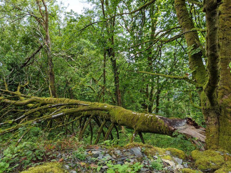 北ウェールズ・スノードニア国立公園 ベトウス=ア=コーエド観光 :plain