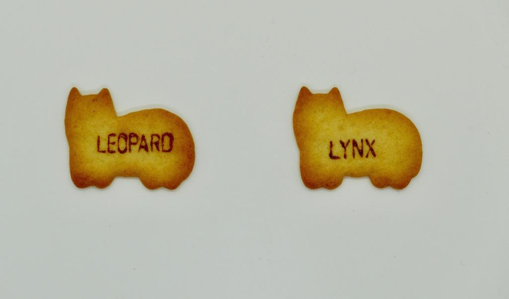 食べっ子動物のLYNXとLEOPADEの画像