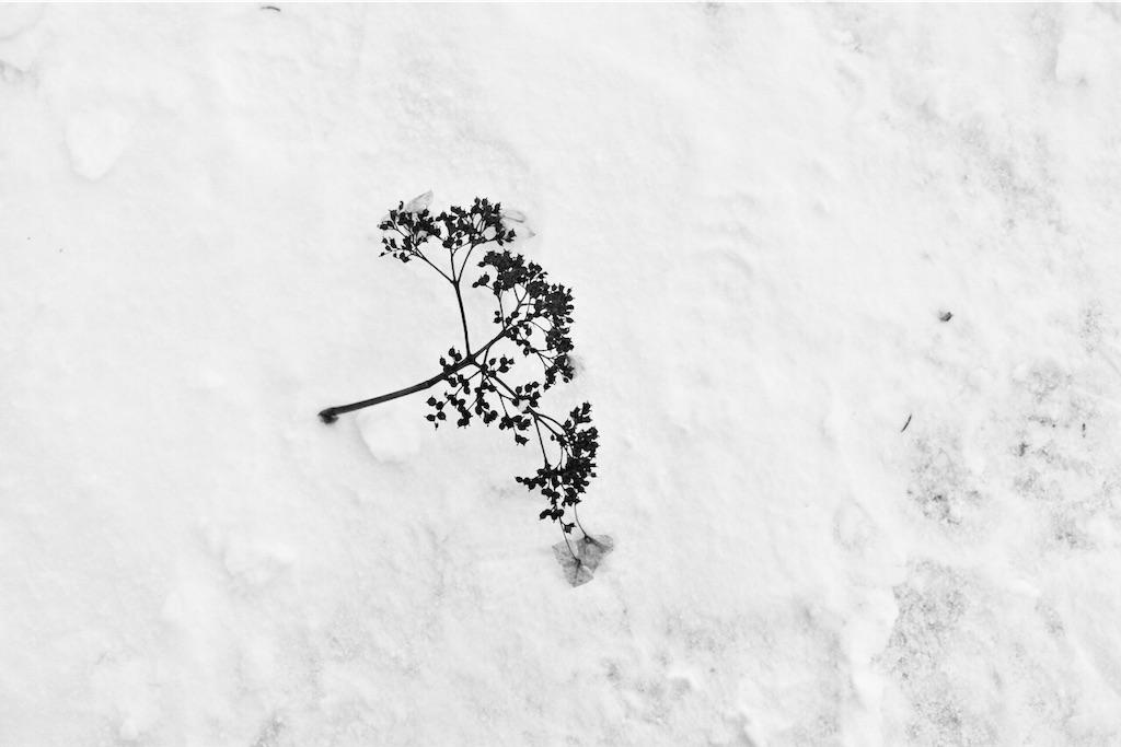 雪から顔をだす富良野