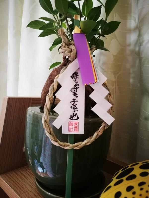 f:id:nachura:20171105101729j:image
