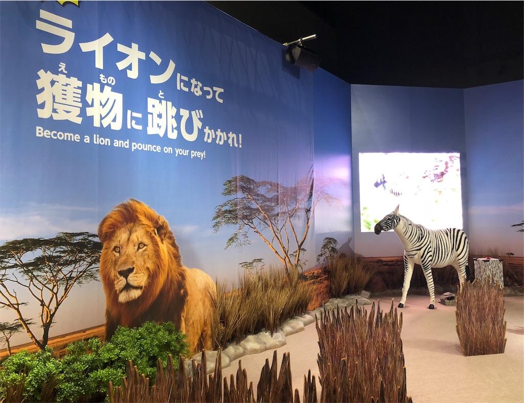 MOVE 生きものになれる展 ライオン