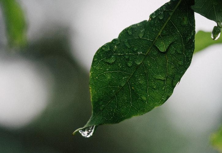 葉っぱ しずく