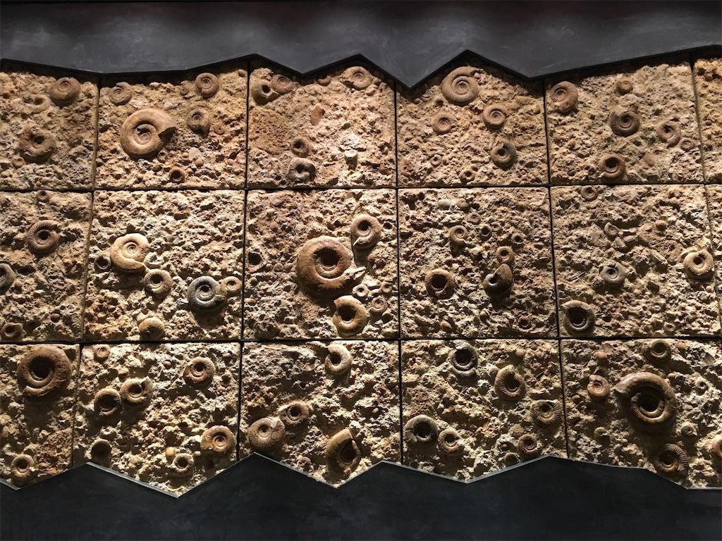 神奈川立生命の星・地球博物館 アンモナイトの壁
