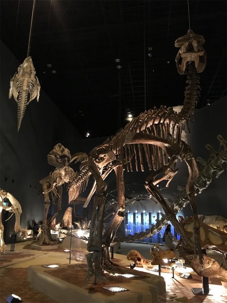 神奈川立生命の星・地球博物館 エドモンドサウルス