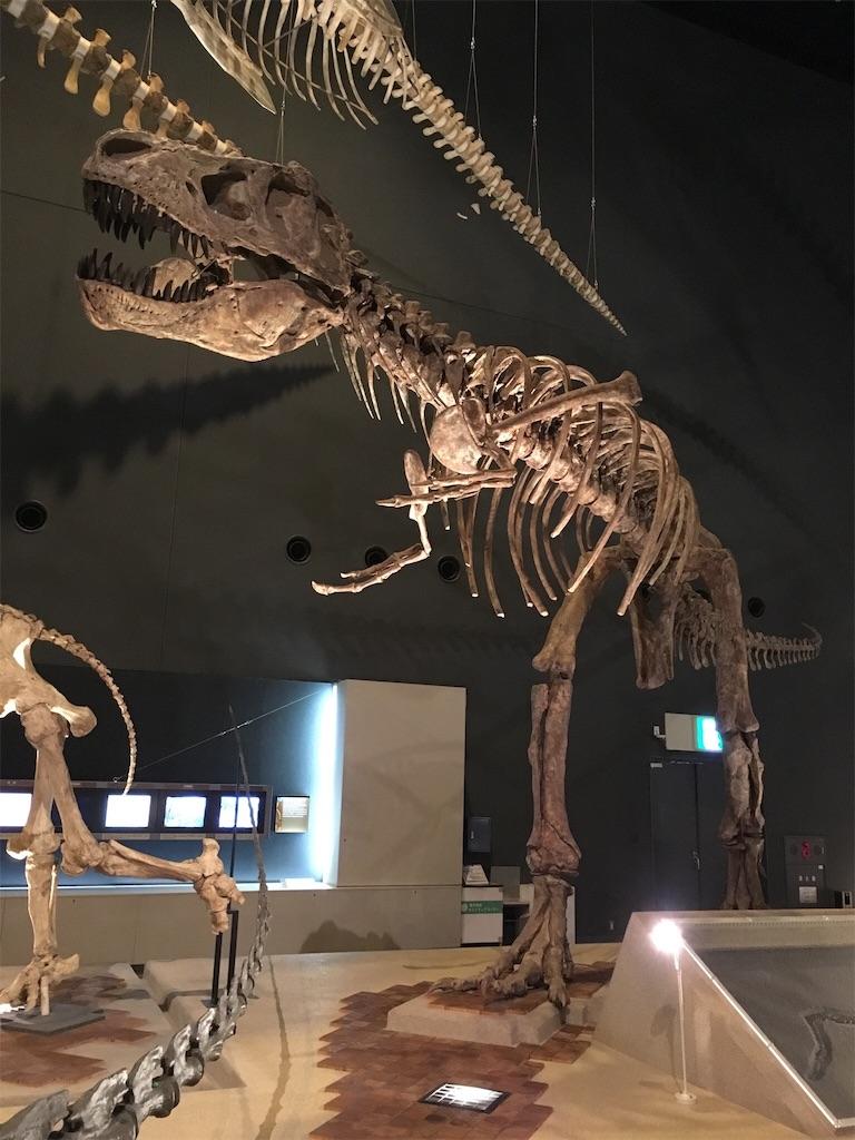 神奈川立生命の星・地球博物館 ティラノサウルス