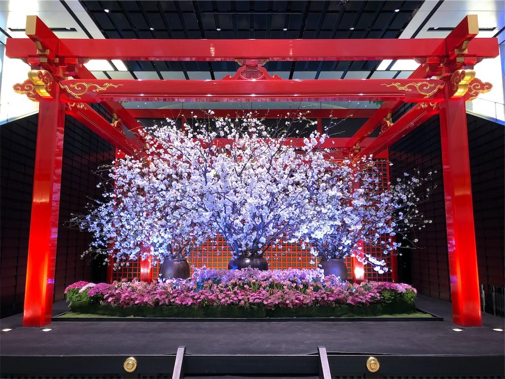 羽田空港 桜