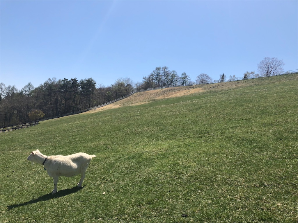 八ヶ岳 まきば公園 ヤギ