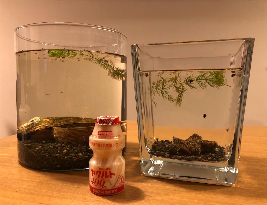 メダカ 稚魚 容器