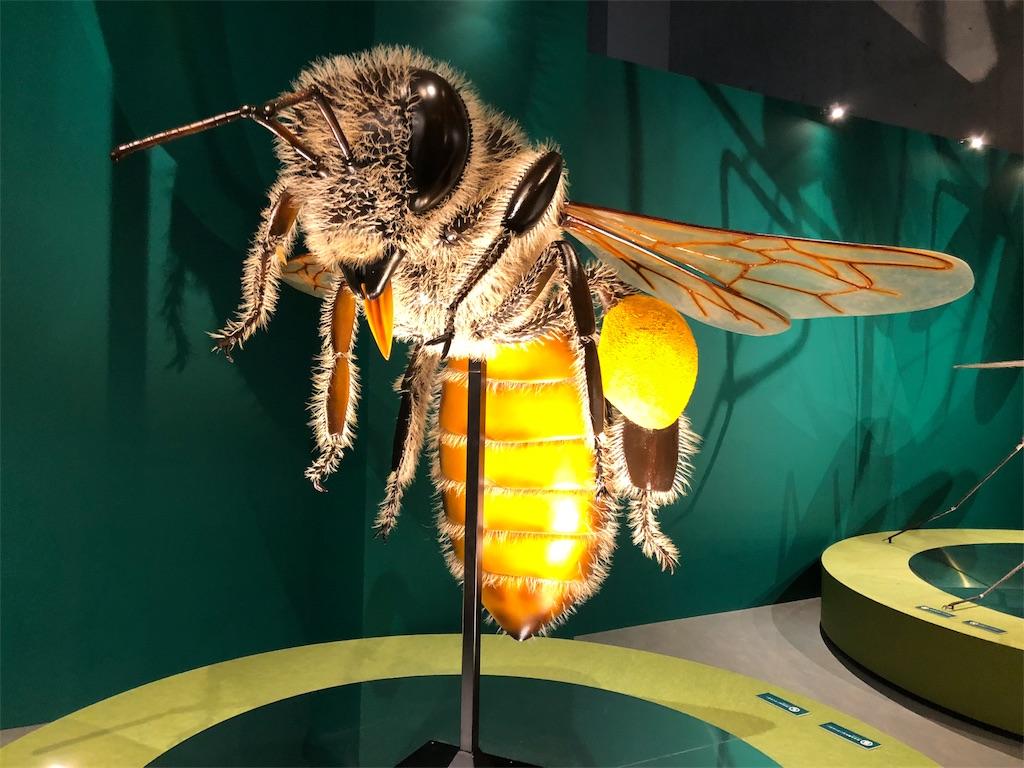 特別展 昆虫 二ホンミツバチ