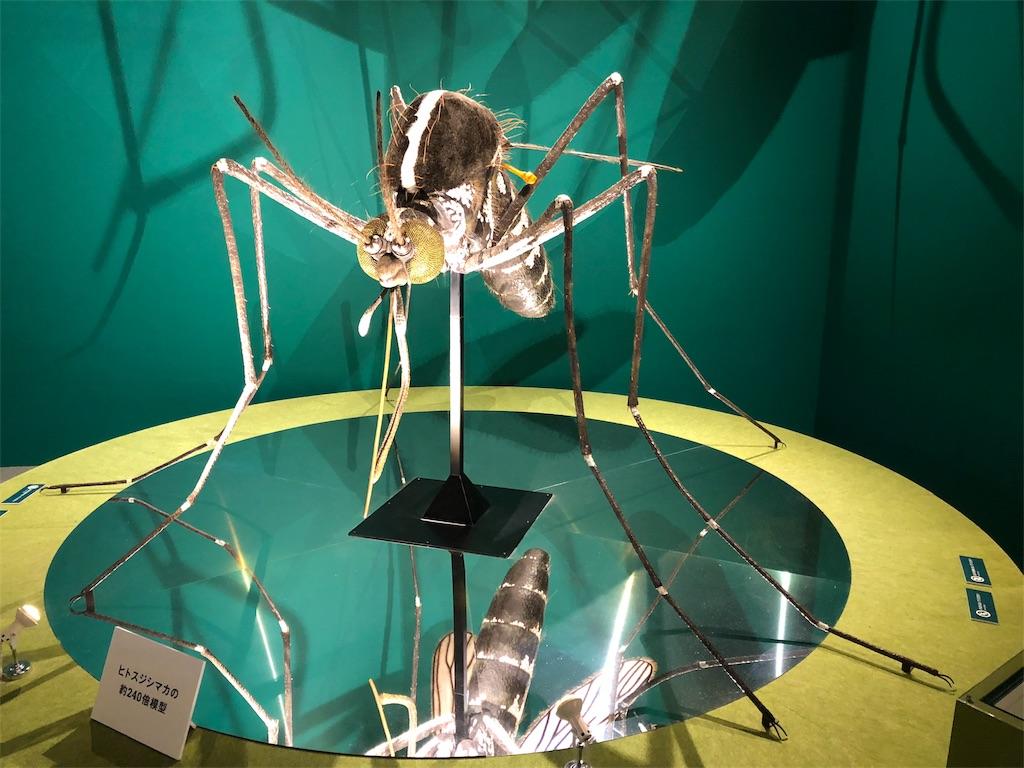 特別展 昆虫 ヒトスジシマカ