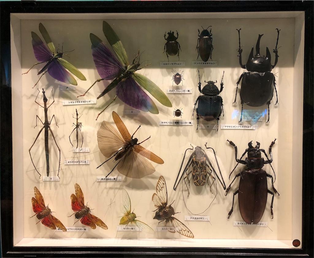 特別展 昆虫 標本