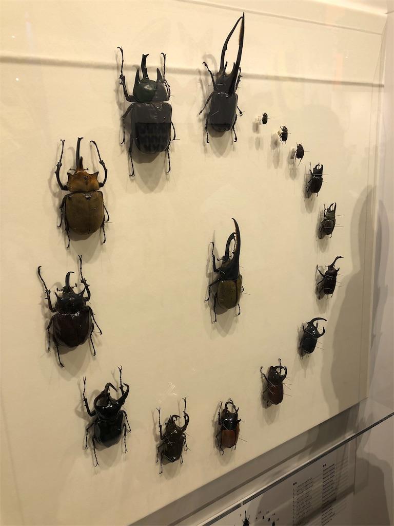 特別展 昆虫 カブトムシ