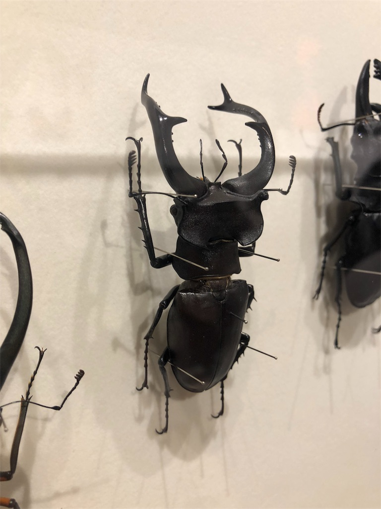 特別展 昆虫 クワガタ