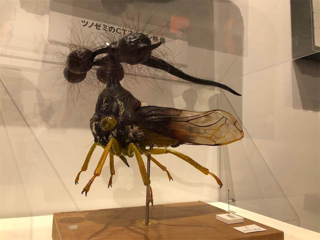 特別展 昆虫 マルヨツコブゼミ
