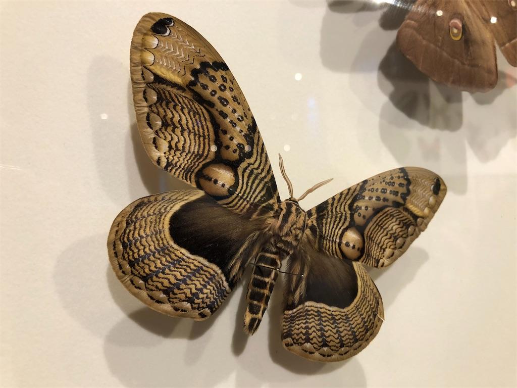 特別展 昆虫 蛾