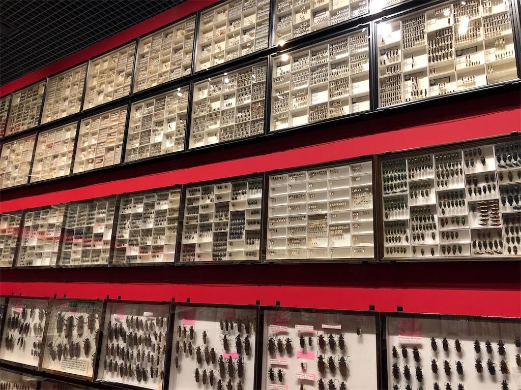 特別展 昆虫 標本回廊