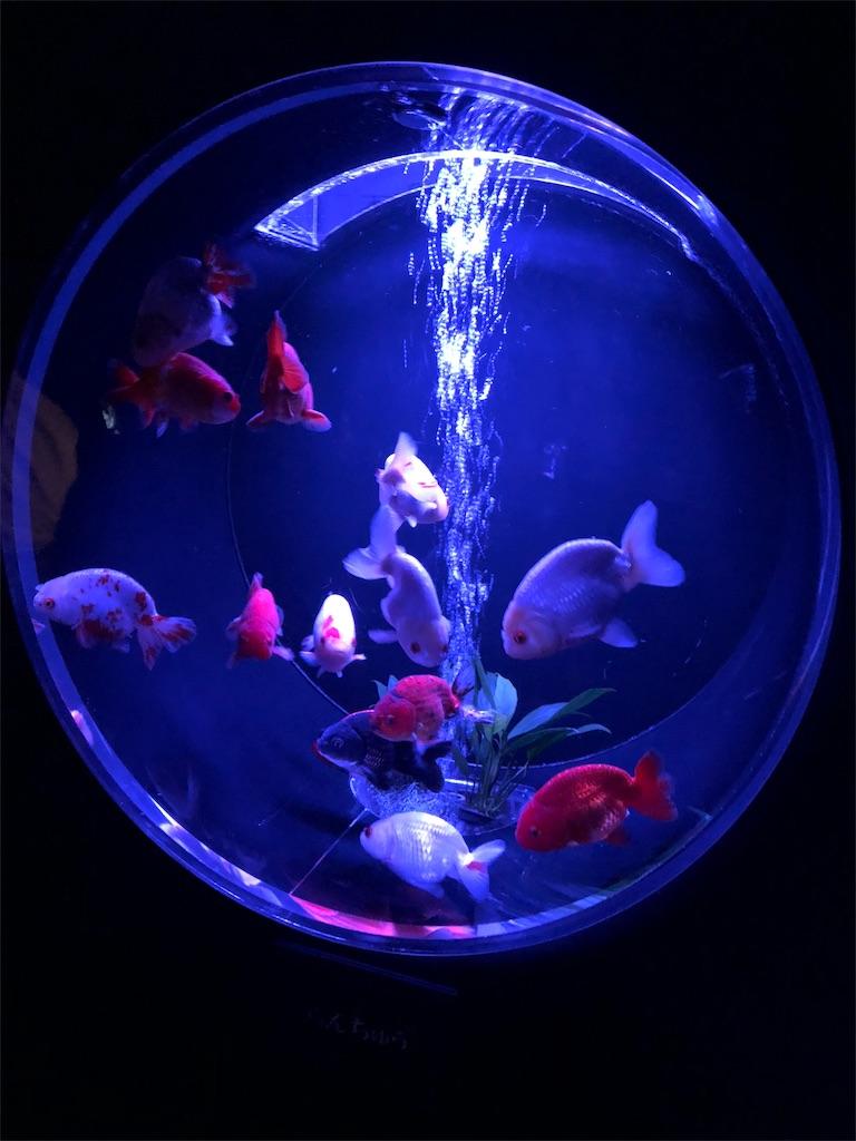 アートアクアリウム 金魚コレクション