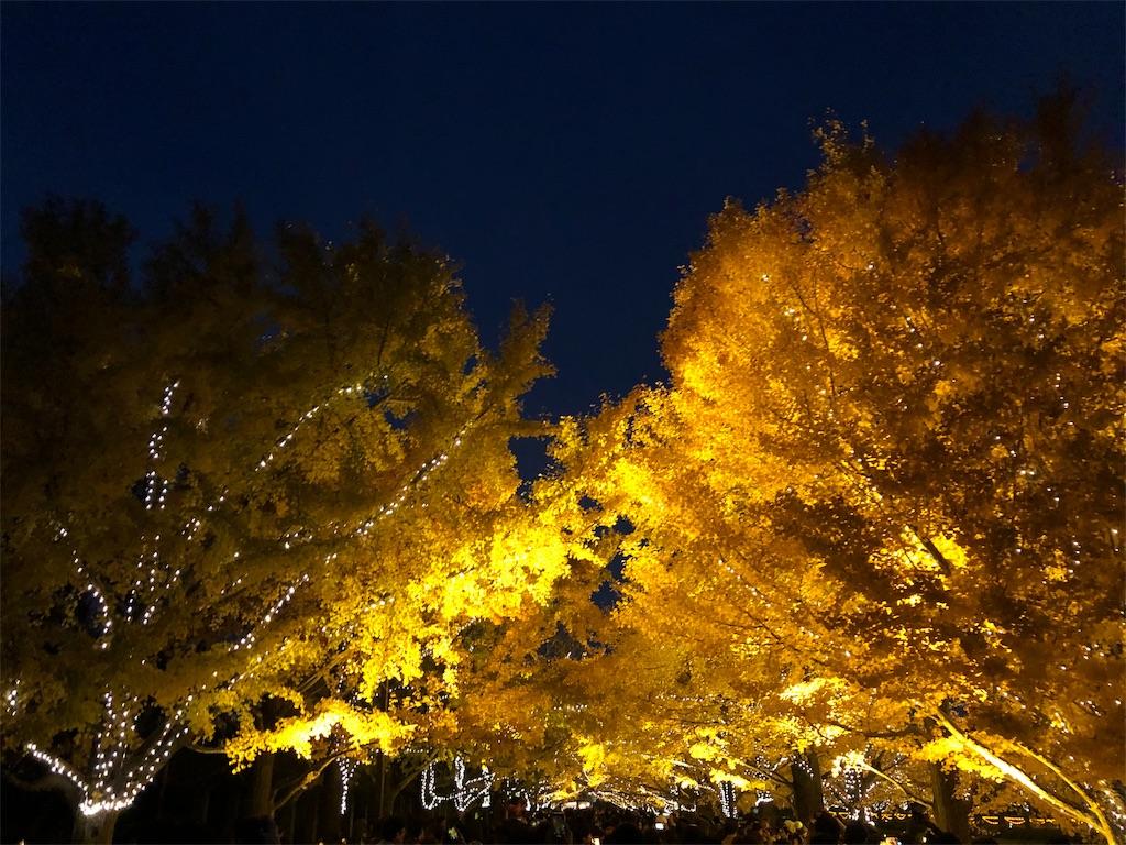 昭和記念公園 紅葉 ライトアップ