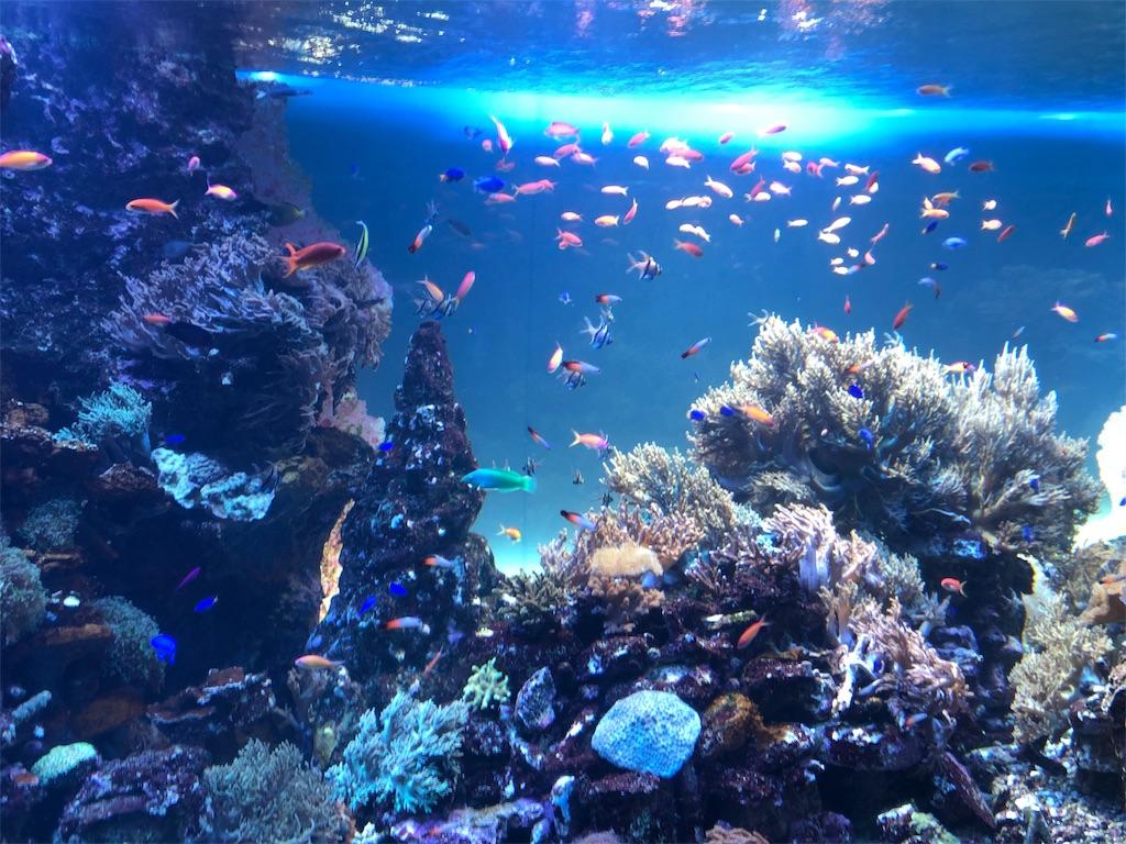サンシャイン水族館 サンゴ礁の海