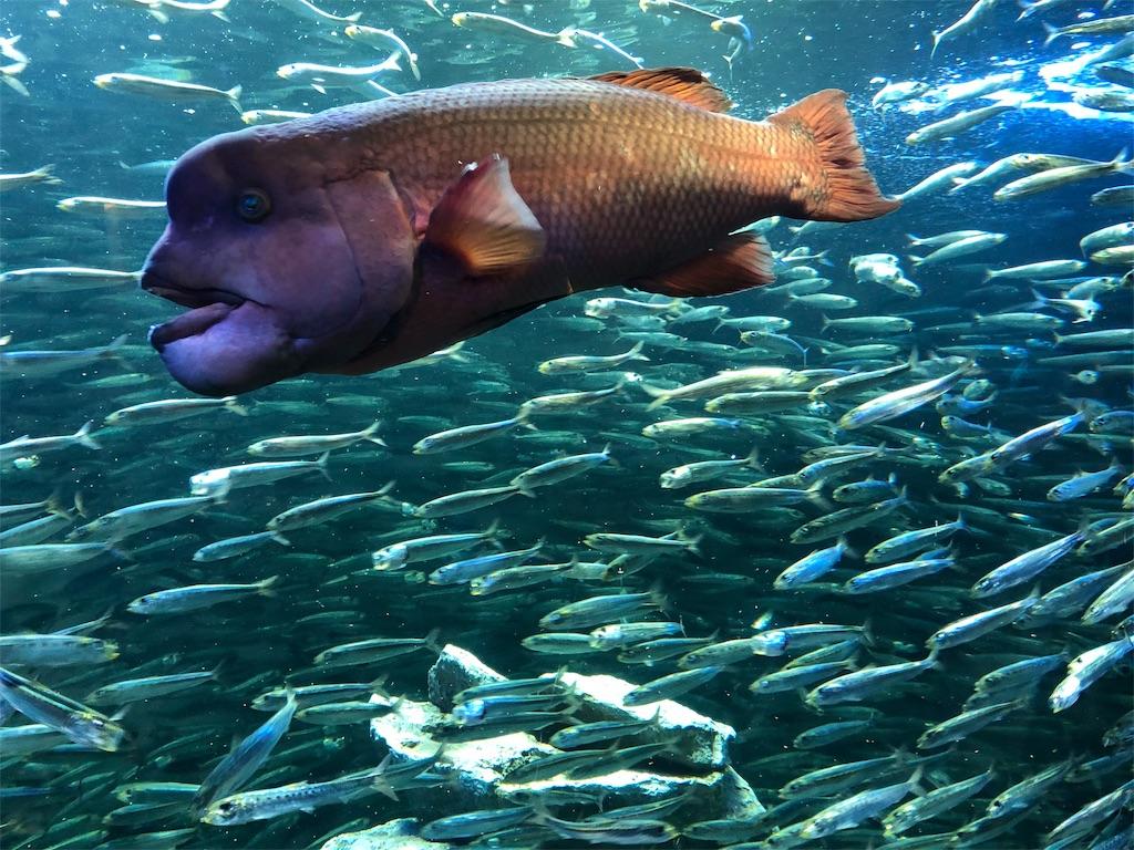サンシャイン水族館 生命の躍動