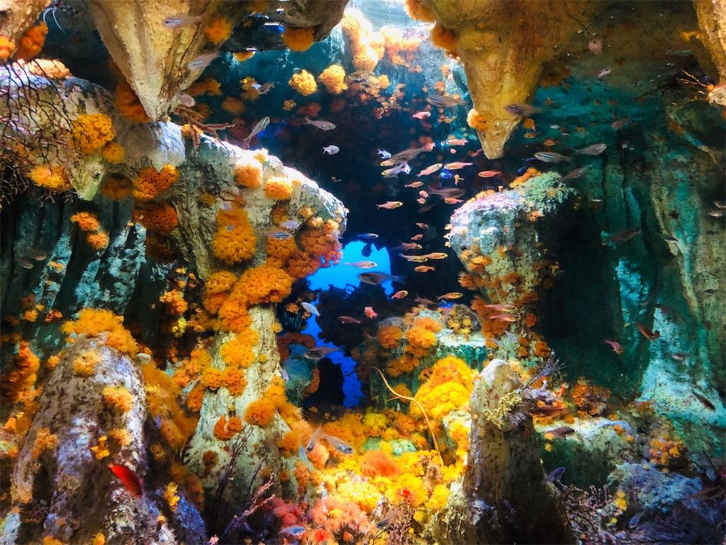 サンシャイン水族館 洞窟に咲く花