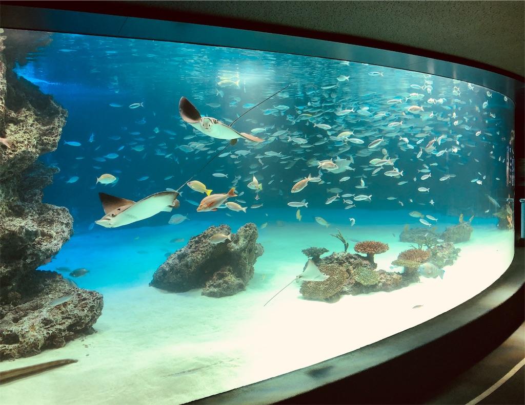 サンシャイン水族館 サンシャインラグーン
