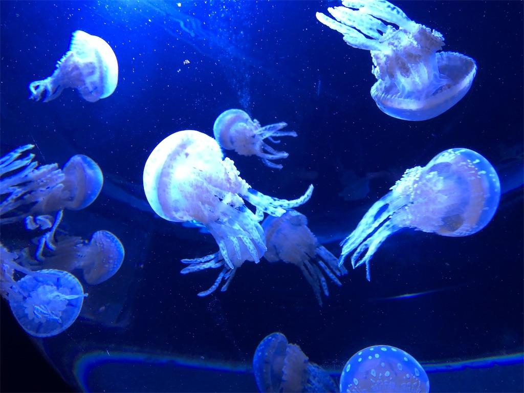 サンシャイン水族館 クラゲ