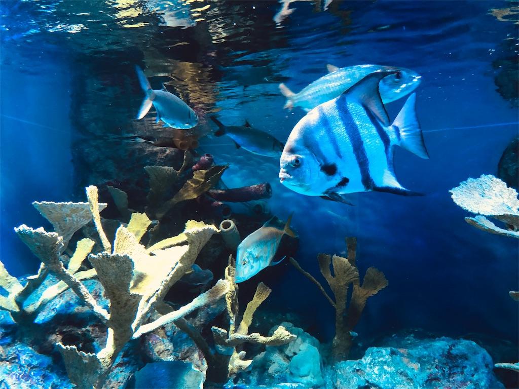 サンシャイン水族館 グレートバリアリーフ