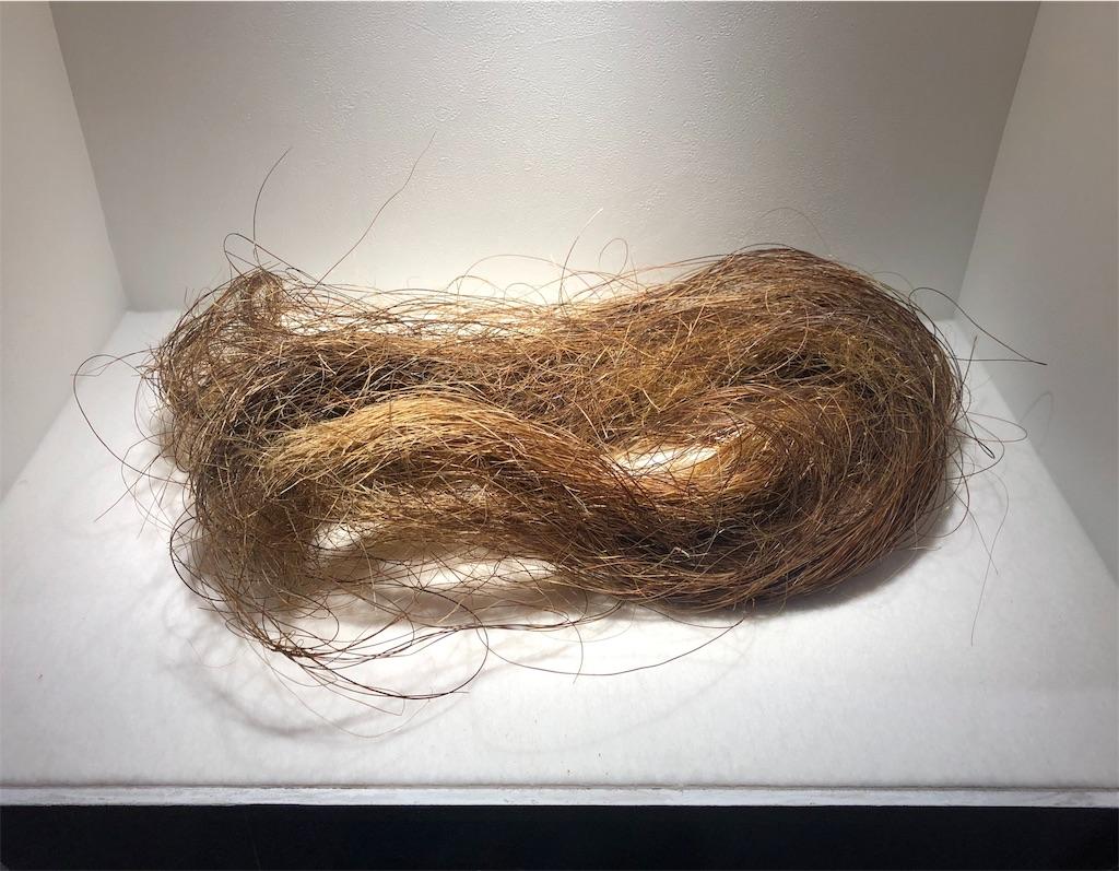 マンモス展 マンモスの毛