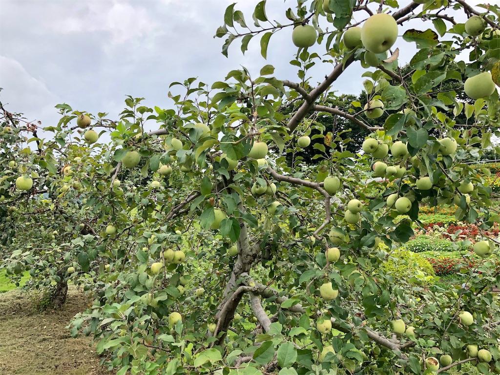 笛吹川フルーツ公園 リンゴ