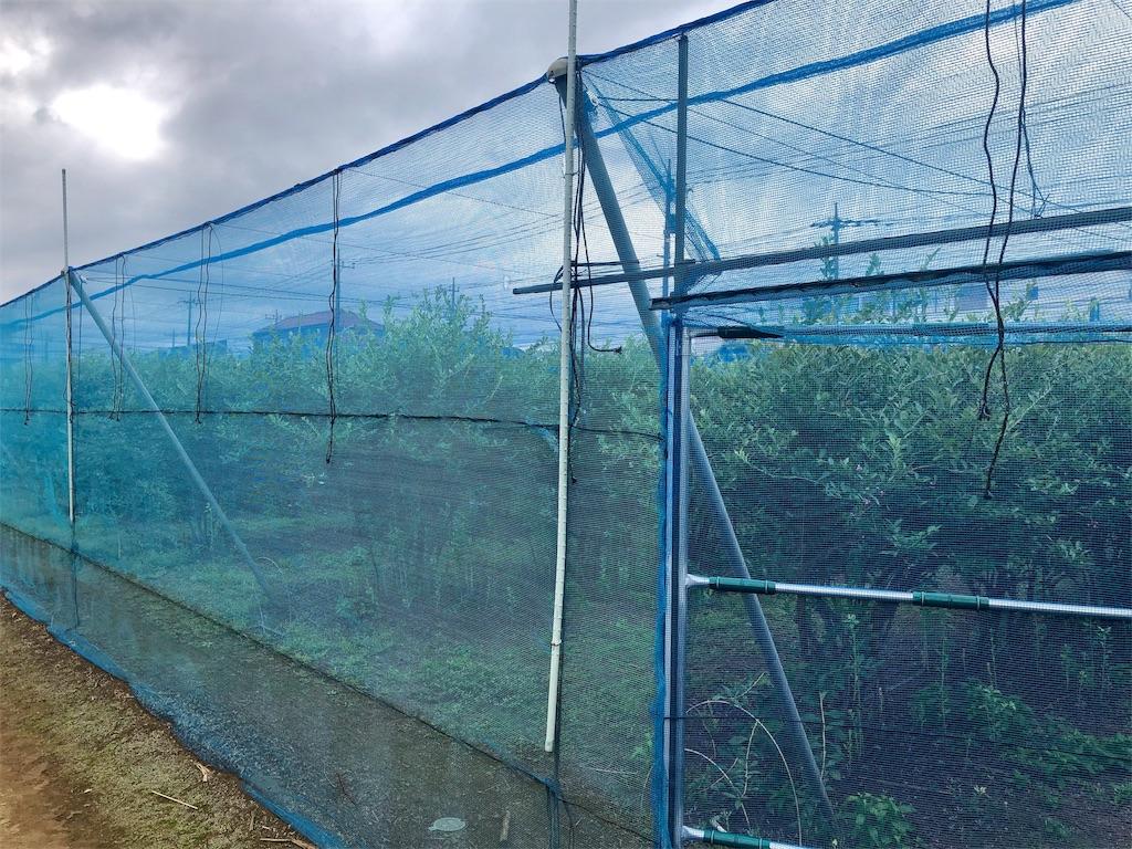 ベンズファーム ブルーベリー畑