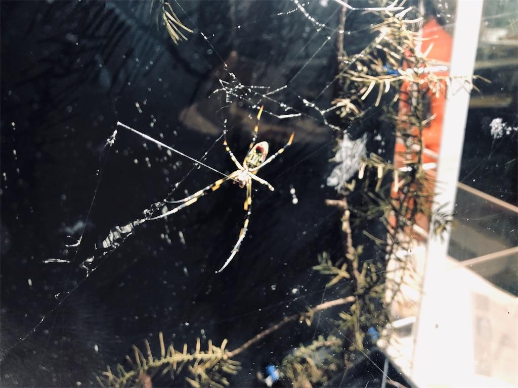 多摩六都科学館 ジョウロウグモ