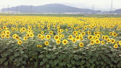 f:id:nagamimiya:20110808210556j:image