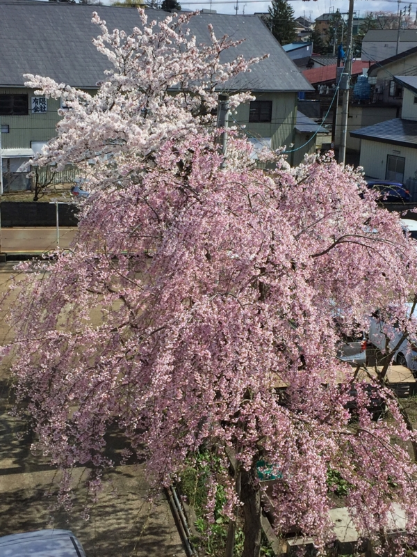 f:id:nagamimiya:20170422215252j:image:w360