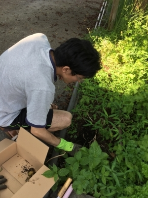 f:id:nagamimiya:20170723110350j:image