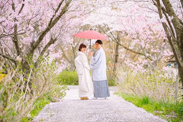 桜でウェディングフォト