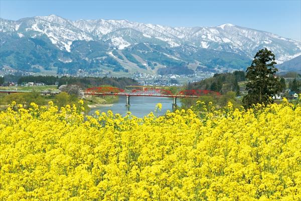 飯山市菜の花公園と残雪の残る山々