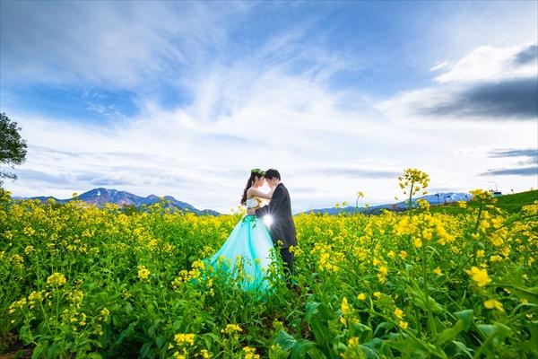 菜の花で撮影をする新郎新婦
