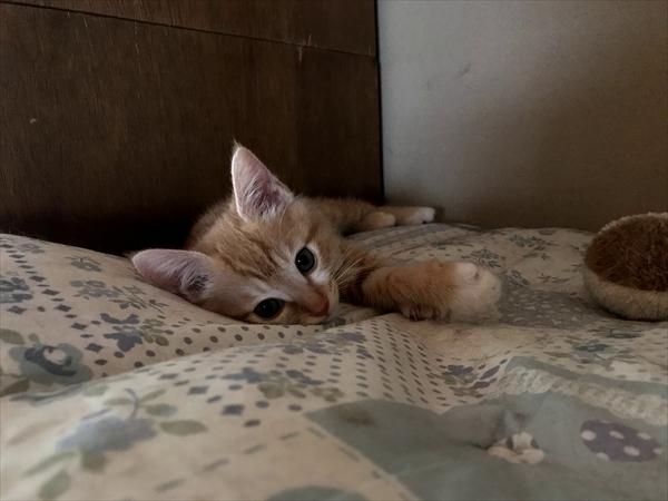 猫の赤ちゃんの写真