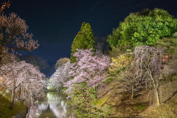 上田城の夜桜