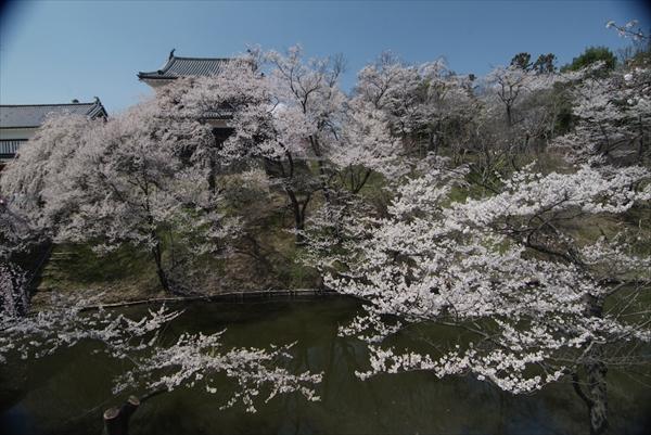 上田城 千本桜まつり