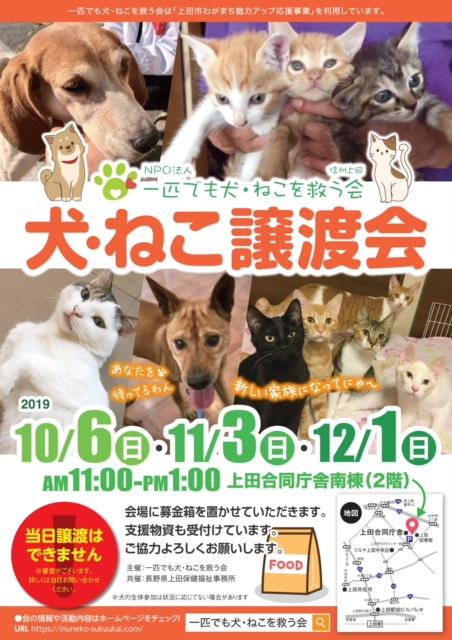 犬・猫の譲渡会のチラシ