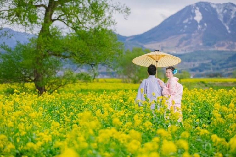 飯山市の菜の花