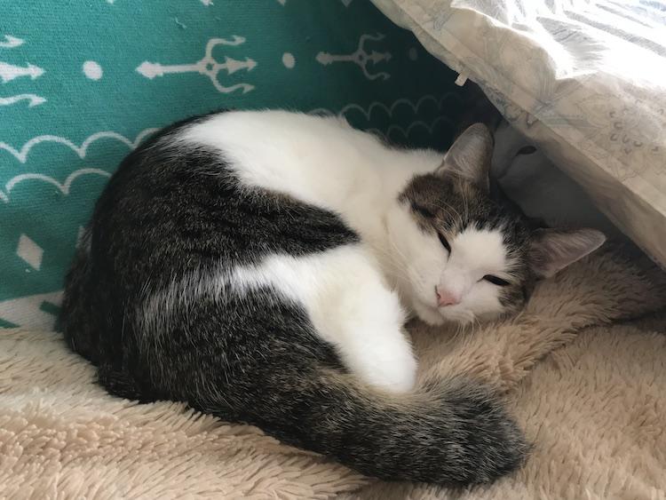 猫が寝てる画像