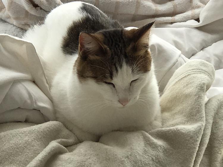 猫の寝てる画像