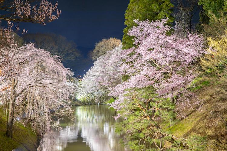上田城千本桜まつりの画像