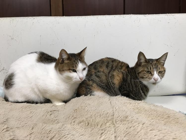 ソファの上に3匹乗っている猫の画像